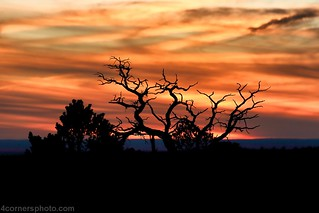 Tree Silhouette, Grand Canyon, AZ