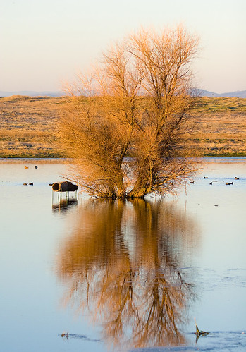 county sunset lake reflection tree 20d water pool canon landscape geese photo pond stream ducks photograph placer placercounty familygetty