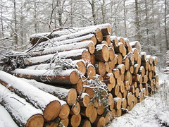 logging, branch, winter, wood, tree, snow, forest, trunk,
