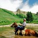 Chancy Wheeldon, Horseback Fishing