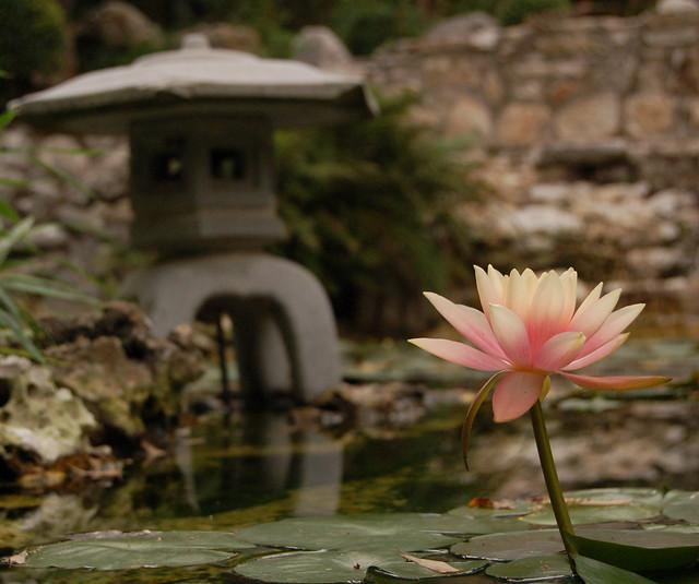 Lotus Flickr Photo Sharing