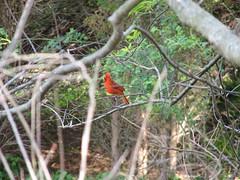 3832 Cardinal