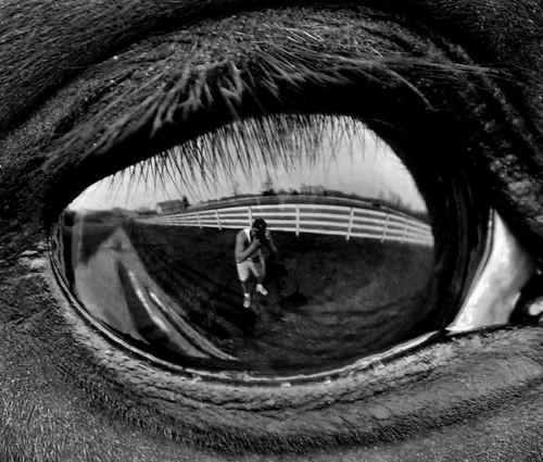 blackandwhite horse reflection eye reflecting newjersey innocent horseeye horsefarm coltsneck eyereflection mikequinn thoroughbredeye farmreflection inncoenteyes rememberthatmomentlevel1