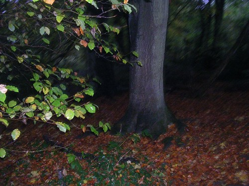 Autumn in a wet wood