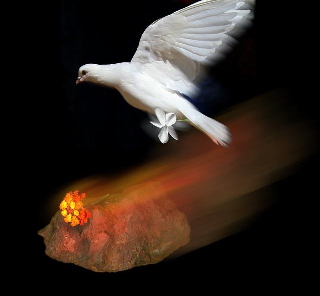 La paloma que se enamor de una piedra volc nica flickr for Piedra volcanica