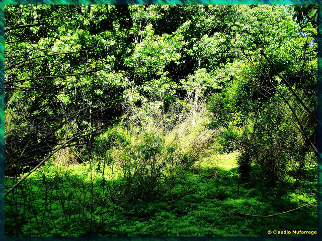 Claro en el Bosque / A clear in the forest
