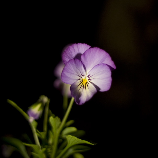 Flower at night flickr photo sharing - Flowers that bloom only at night ...