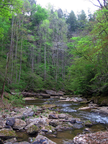 Blackburn Fork Creek, Jackson Co, TN