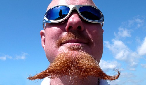 L1020385samored-beard
