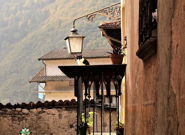 Il guardiano del balcone, Canon EOS 70D, EF50mm f/1.4 USM