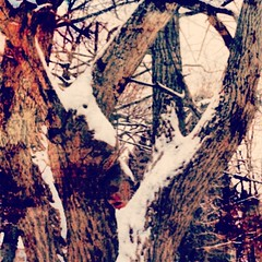 Just playing with #photoeffects of our old Chestnut tree