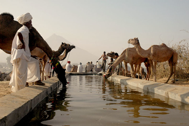 Pushkar camel fair - how to buy a rtw ticket