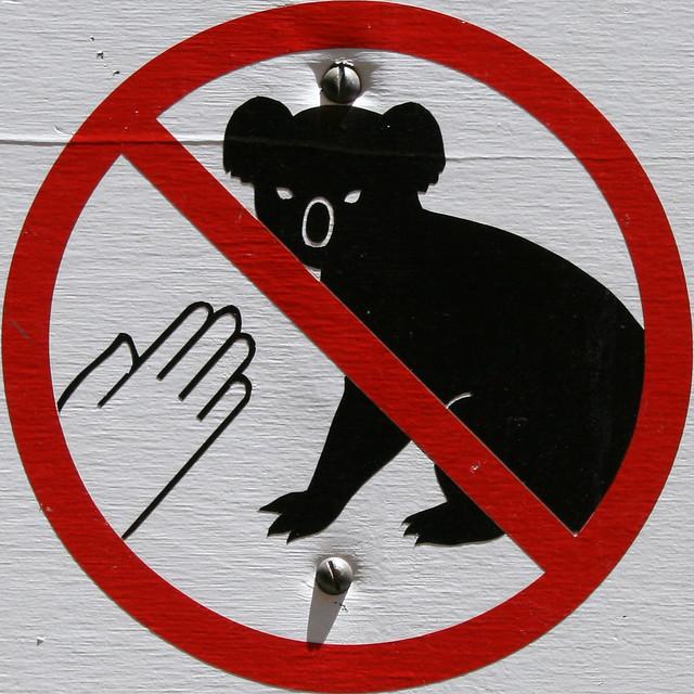 Squared Circle - no touching koalas