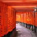 T A N G E R I N E : Fushimi Inari by mboogiedown