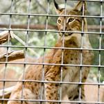 San Diego Zoo 053