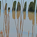 Post reflections with reeds  by tomswift46 ( Hi Res Images for Sale)