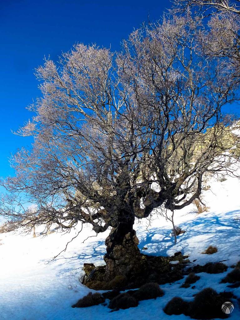 Una maravilla de árboles