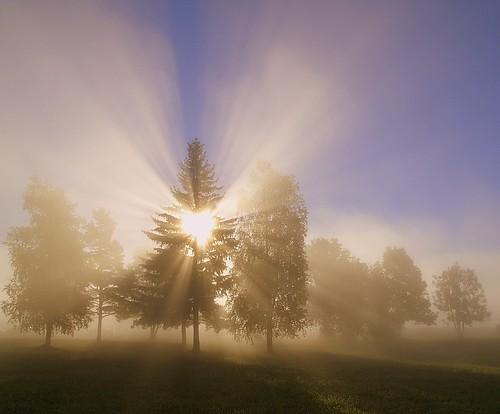 morning trees mist tree misty fog bravo foggy puu soe puud morningfog hommik themoulinrouge udu mistysunrise foggysunrise mywinners welcometoestonia aplusphoto janne4janne udunepäikesetõus udune
