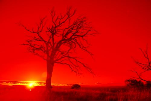 trees sunset branches australia canberra lkphotography nikond40x giraffe2605