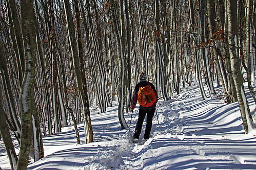 slovenija slovenia slavnik hiking landscape outdoor forrest woods