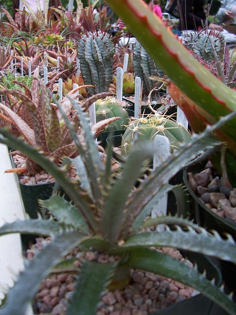 Small Succulents For Sale Flickr Photo Sharing