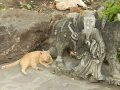 Cats at Wat Pho - Bangkok (3)