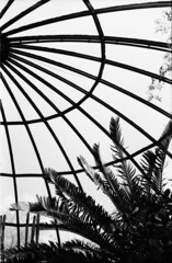 Greenhouse and palm