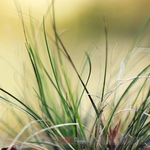 wild blur grass forest suomi finland square spring dof bokeh lappeenranta kevät