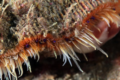 animal, coral, marine biology, macro photography, marine invertebrates, fauna, close-up,