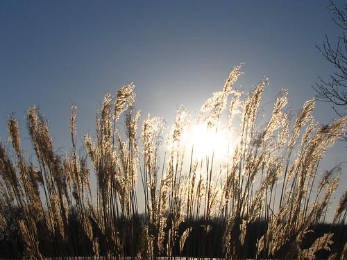 sky sun grass evening