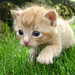 Katze 3 by Urs Wachter™