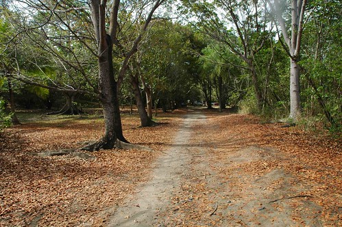 trees nature leaves puerto view rico humacao