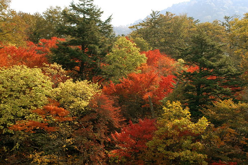 中禅寺湖畔の紅葉3