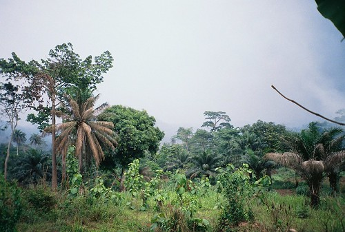 africa ghana westafrica ashanti deforestation agogo patriensa asante ashantiregion