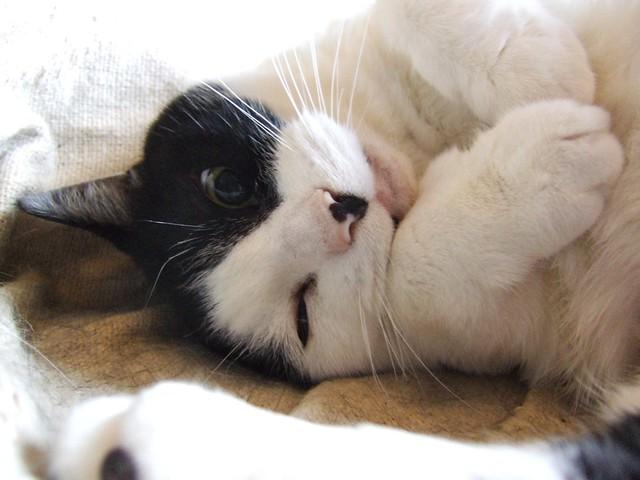 Sleepy Cassie 3