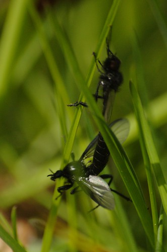 Maartse vliegen annetannes tuin for Vliegen in de tuin