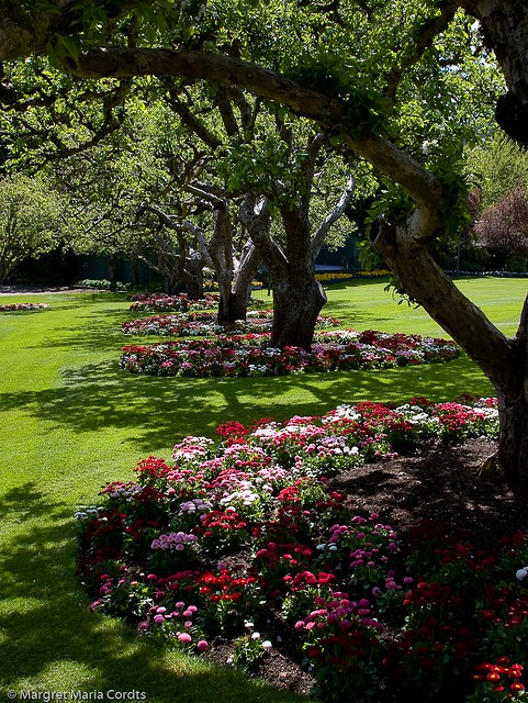 Tree Flower Bed : flower beds under trees  Flickr - Photo Sharing!