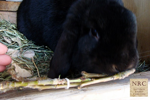 Safe, Homemade, and Healthy Rabbit Toys - Natural Rabbit Care