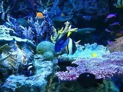 deep sea fish(0.0), coral reef(1.0), coral(1.0), fish(1.0), coral reef fish(1.0), organism(1.0), marine biology(1.0), aquarium lighting(1.0), natural environment(1.0), underwater(1.0), reef(1.0), pomacentridae(1.0), sea anemone(1.0),