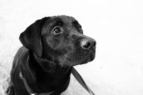 Uso de cães como rastreadores - PetLove