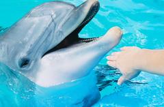 B is for Bottlenosed Dolphin 2