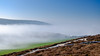 Frost & Fog at Headon Warren - DSCF2197