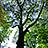 the Tree Fanatics group icon