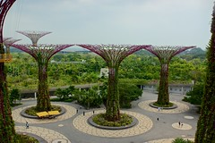 Supertree grove from the OCBC Skyway at the Gardens by the Bay in Singapore