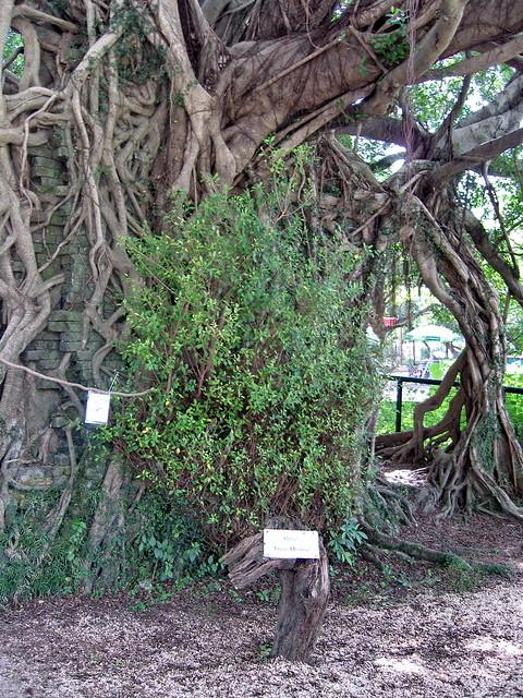 Photo:Kam Tin Tree House - 2007-09-30 14h07m40s SN200812 By 惡龍~Stewart