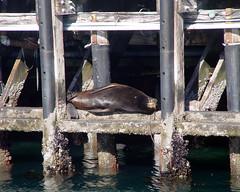 Santa Cruz - Monterey - Carmel