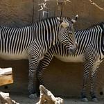 Los Angeles Zoo 033