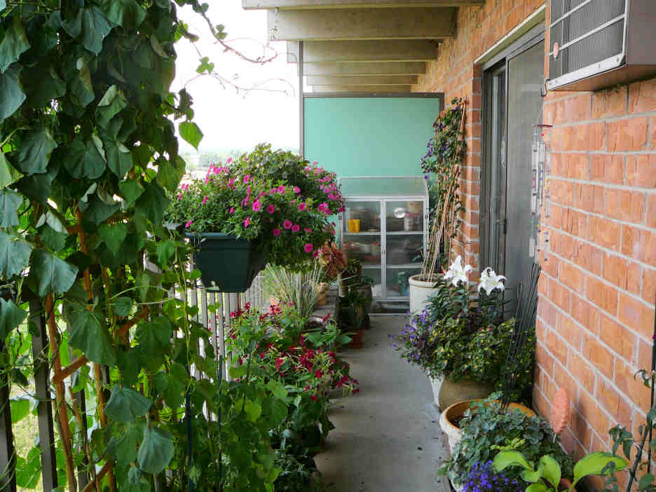 Vine Suggestions For Balcony Lattice Screen