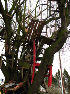 chair eating tree - 1