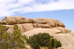 Joshua Tree National Park, 2009 - 075